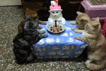 So feiern Katzen Geburtstag