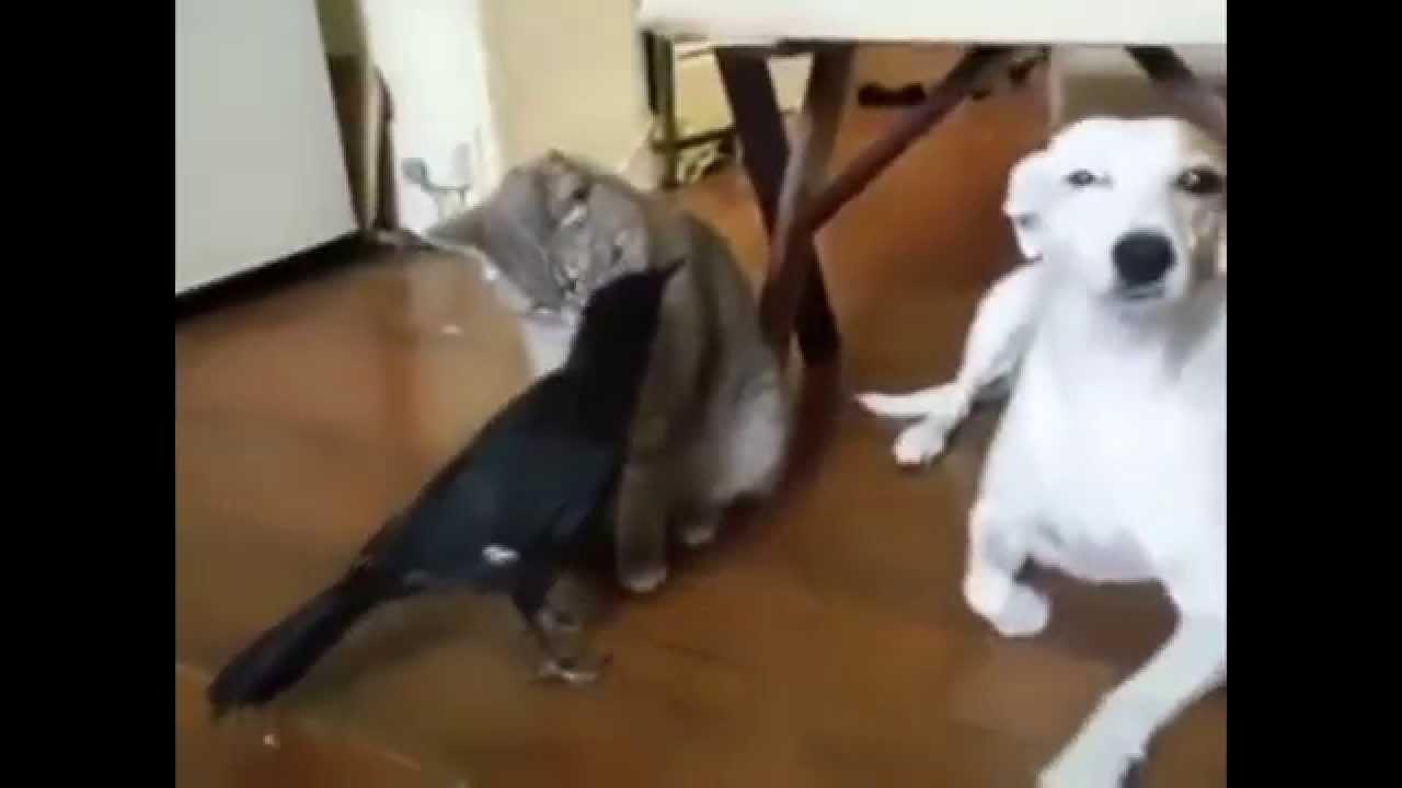 Katze leckt Hund Dick