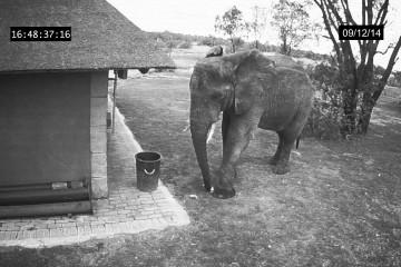 Ungewöhnliche Reaktion eines Elefanten