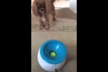 Hunde-Beschäftigungs-Maschine