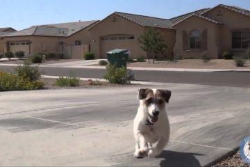 Hund als Helfer für alles