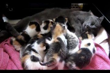 8 Katzenbabys plus Mama