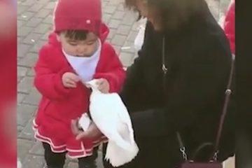 Kind mit Durchsetzungsvermögen
